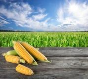 Cereale crudo sul campo di grano Immagini Stock