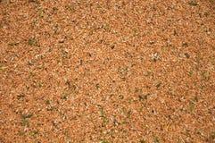 Cereale del granulo Immagini Stock Libere da Diritti