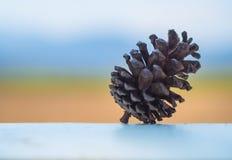 Cereale del pino con il backgorund della sfuocatura immagini stock