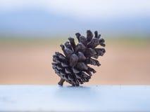 Cereale del pino con il backgorund della sfuocatura Fotografie Stock