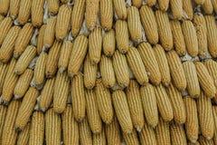 Cereale del primo piano sul gambo nel campo di grano Fotografia Stock Libera da Diritti