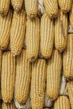 Cereale del primo piano sul gambo nel campo di grano Fotografia Stock