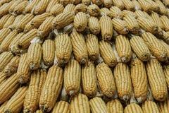 Cereale del primo piano sul gambo nel campo di grano Immagine Stock Libera da Diritti