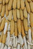Cereale del primo piano sul gambo nel campo di grano Immagini Stock Libere da Diritti