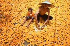 CEREALE DELLA SBUCCIATURA Fotografie Stock