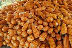 Cereale di campo Immagini Stock