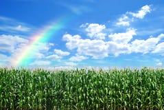 Cereale di colore Fotografia Stock Libera da Diritti
