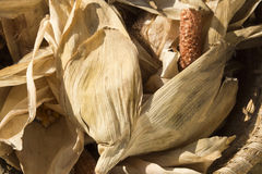 Cereale di secchezza Fotografie Stock