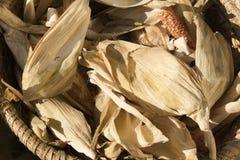Cereale di secchezza Fotografia Stock