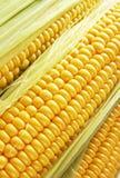 Cereale dorato Fotografia Stock