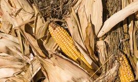 Cereale e fieno maturi sul festival del raccolto di ringraziamento di autunno fondo, alimento fotografie stock libere da diritti