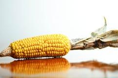 Cereale e soldi Fotografia Stock Libera da Diritti