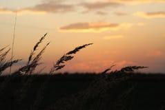 Cereale e tramonto Immagini Stock Libere da Diritti