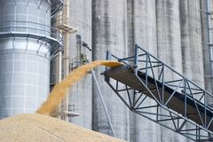 Cereale in eccedenza accatastato sulla terra Fotografie Stock