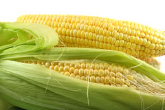 Cereale fresco Immagine Stock Libera da Diritti