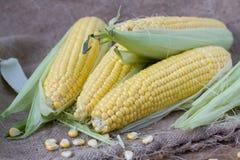 Cereale fresco fotografia stock libera da diritti