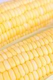 Cereale fresco grezzo Immagine Stock Libera da Diritti
