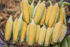 Cereale fresco nel servizio Fotografie Stock Libere da Diritti