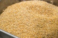 Cereale germinato pronto per il processo di panificazione fotografia stock