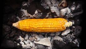 Cereale giallo grigliato sui carboni Fotografia Stock
