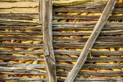 Cereale giallo maturo nel vecchio granaio di legno Immagini Stock