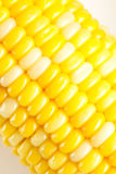 Cereale giallo nella riga Fotografia Stock