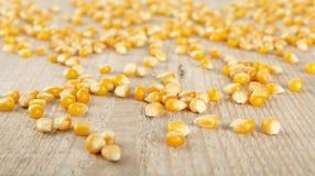 Cereale giallo secco maturo sparso sullo scrittorio di legno fotografie stock
