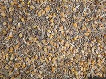 Cereale, grano, segale - sfondo naturale Fotografia Stock Libera da Diritti
