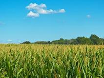 Cereale il raccolto di estate Immagine Stock Libera da Diritti