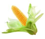 Cereale isolato Immagine Stock Libera da Diritti