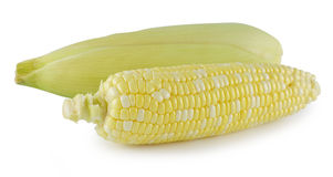 Cereale isolato su una priorità bassa bianca Fotografia Stock