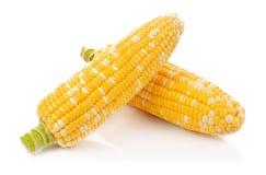 Cereale isolato su una priorità bassa bianca Fotografia Stock Libera da Diritti