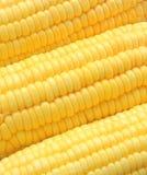 Cereale maturo del primo piano Fotografia Stock Libera da Diritti