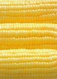 Cereale maturo del primo piano Immagine Stock Libera da Diritti
