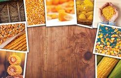 Cereale nell'agricoltura, collage della foto Fotografia Stock