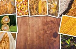 Cereale nell'agricoltura, collage della foto Immagini Stock