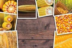 Cereale nell'agricoltura, collage della foto Fotografia Stock Libera da Diritti