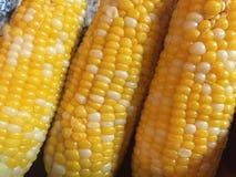 Cereale nostrano Fotografia Stock