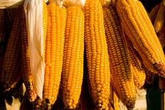 Cereale pieno di sole Fotografia Stock Libera da Diritti
