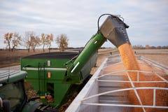 Cereale scaricante del rimorchio e del trattore nei semi Fotografie Stock