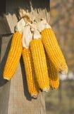 Cereale secco Fotografie Stock