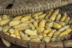 Cereale secco Fotografia Stock Libera da Diritti
