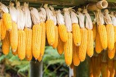 Cereale sotto la Camera Fotografia Stock Libera da Diritti