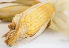Cereale su fondo bianco Immagini Stock Libere da Diritti