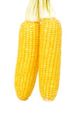 Cereale su una priorità bassa bianca Immagine Stock Libera da Diritti