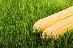Cereale sull'erba verde Immagini Stock