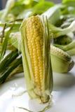 Cereale sulla pannocchia immagini stock