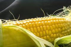 Cereale sulle pannocchie Fotografie Stock Libere da Diritti