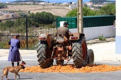Cereale tradizionale che frantuma con il trattore, Portogallo Immagine Stock Libera da Diritti
