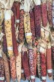 Cereale variopinto su di mercato di autunno Immagine Stock